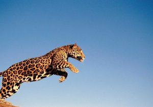 Animales en extinción: botín criminal