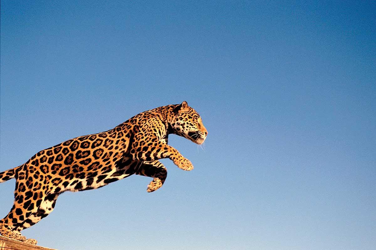 animales-peligro-extinción