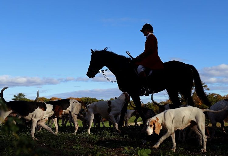 ¿Mantendrán la prohibición de caza de zorros con montería en Reino Unido?