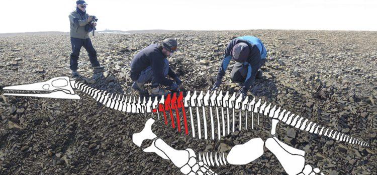 Un antiguo reptil en la Antártida