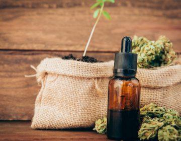México alista venta de productos hechos a base cannabis