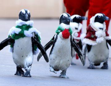 Zoológico de Canadá resguarda a pingüinos del frío