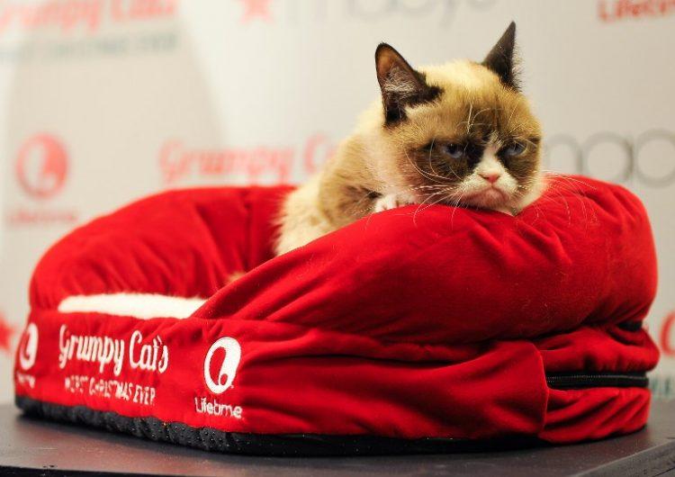"""¿Un """"meme"""" te puede volver rico? Así es como la dueña del """"Grumpy Cat"""" ha hecho su fortuna"""