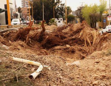 Retiró Gobierno 288 árboles por construcción de pasos a desnivel