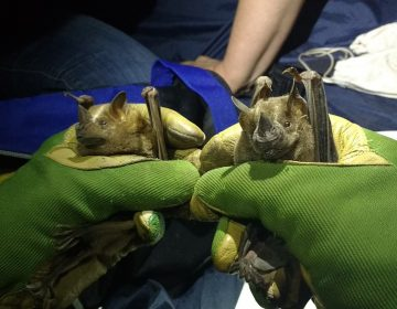 México creará su primer santuario para protección de murciélagos