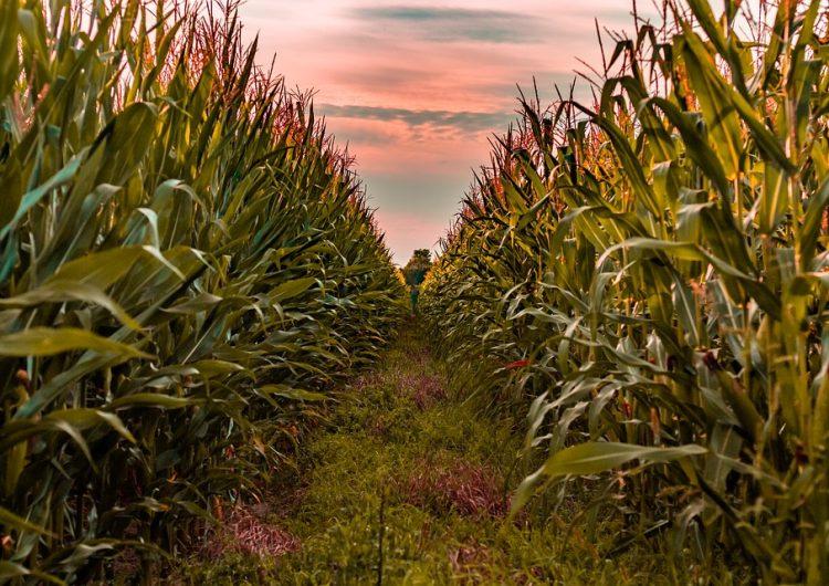 Produce campo más dinero en primavera