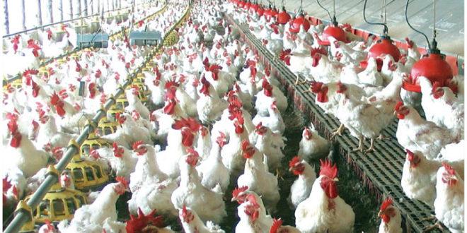Dan aves y leche lugar 10 a Aguascalientes en producción
