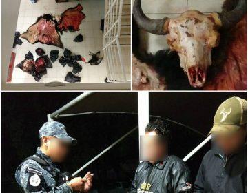 Transportaban piel de bisonte en Aguascalientes