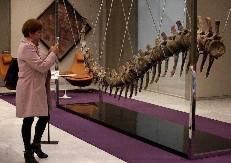 La venta de una cola de dinosaurio en México causa una investigación sobre su origen