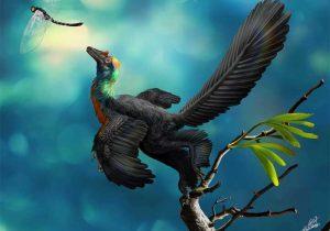 Encuentran dinosaurio con plumas del color del arcoíris