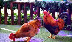 Confirman el primer caso humano de gripe aviar H7N4 en…