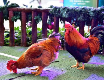 Confirman el primer caso humano de gripe aviar H7N4 en China