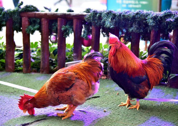 Confirman el primer caso humano de gripe aviar H7N4 en China