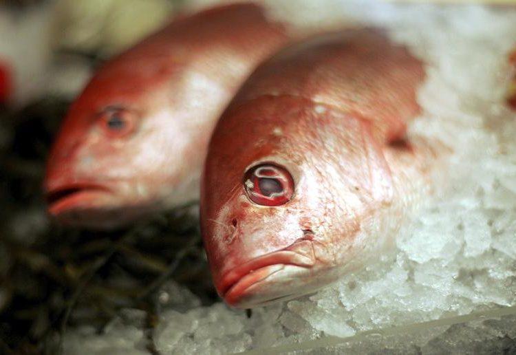 Pescado, carne y nueces: las proteínas son tus aliadas contra el alzhéimer