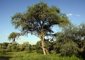 Desmienten ecologistas a promovente de fraccionamiento en Cobos