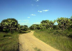 Revisan ambientalistas proyecto de Cobos