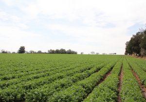 Becará Sedrae 10 proyectos emprendedores agropecuarios
