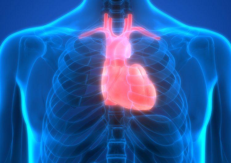 El corazón artificial: mitos y realidades que salvan vidas