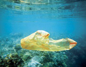 La flotante isla de la muerte: así es como tu basura mata a los océanos