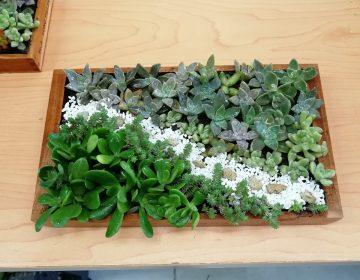 Aprenden mujeres de Jesús María artesanías con plantas