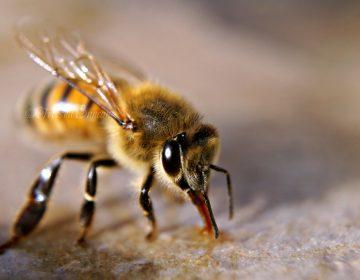 Gana miel de Aguascalientes primer certificado TIF