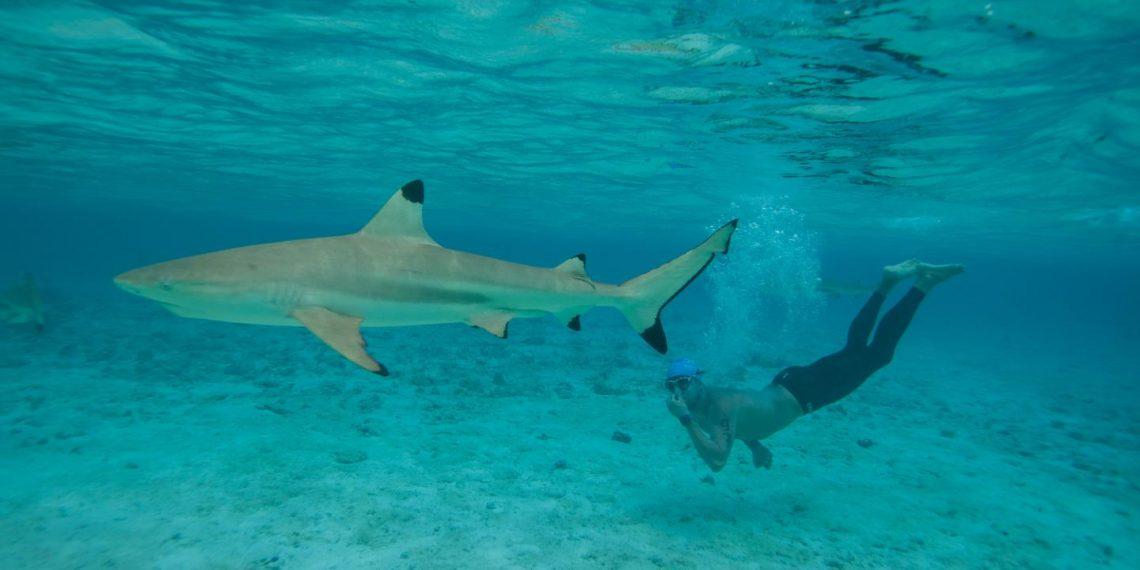 tiburón aviones rápido