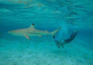 Para volar más rápido, los humanos deben mirar la piel del tiburón