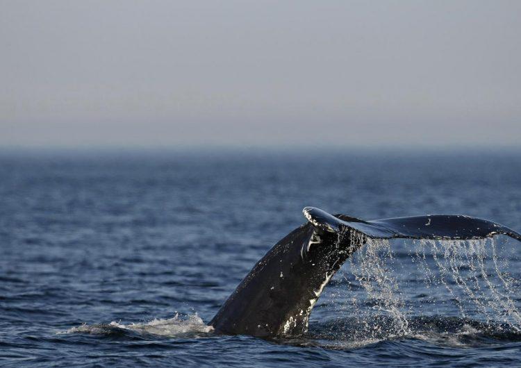 Así se ve la Antártida desde los ojos de una ballena Minke