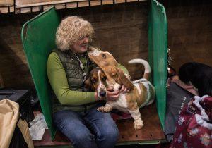Perros para personas con discapacidad y animales de asistencia: un amigo de por vida