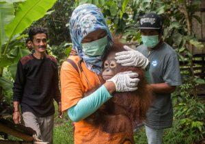 """Rescatan a orangutanes utilizados como """"animales de compañía"""""""