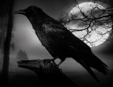El tenebroso universo de Poe  Los tormentos de un escritor de alas negras
