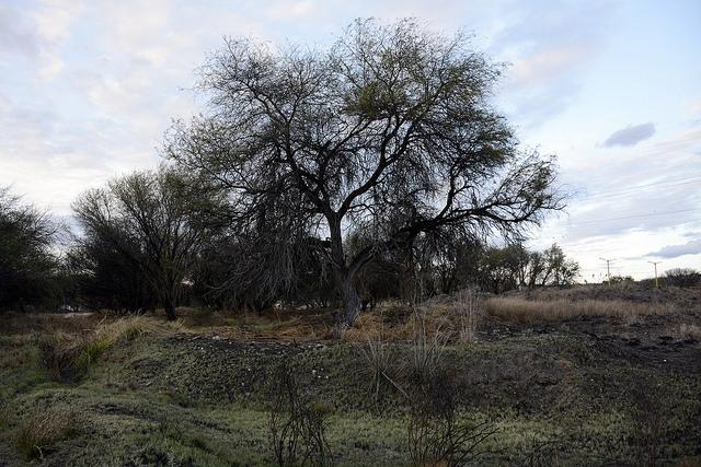 Dudan ambientalistas sobre proyecto en La Pona