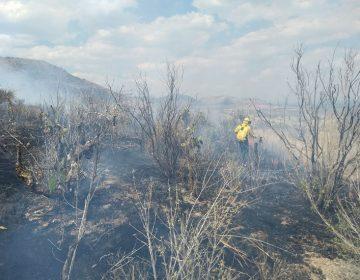 Más de 450 hectáreas forestales siniestradas en 2018