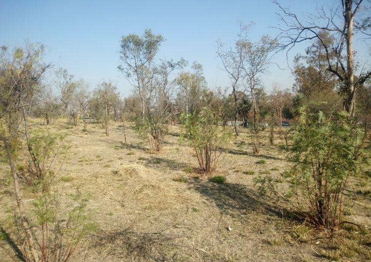 Imposible resarcir daño ecológico por Plaza Adana: ambientalistas