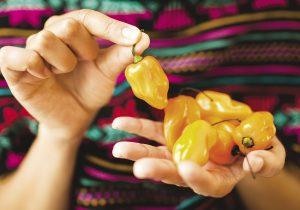 Cocina mexicana: una destacada herencia femenina