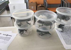 Camaleones, tortugas y rana iban por mensajería en SLP