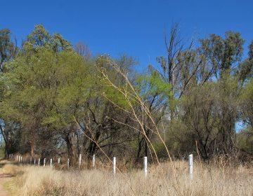 Constará de 28 hectáreas proyecto de intervención de La Pona