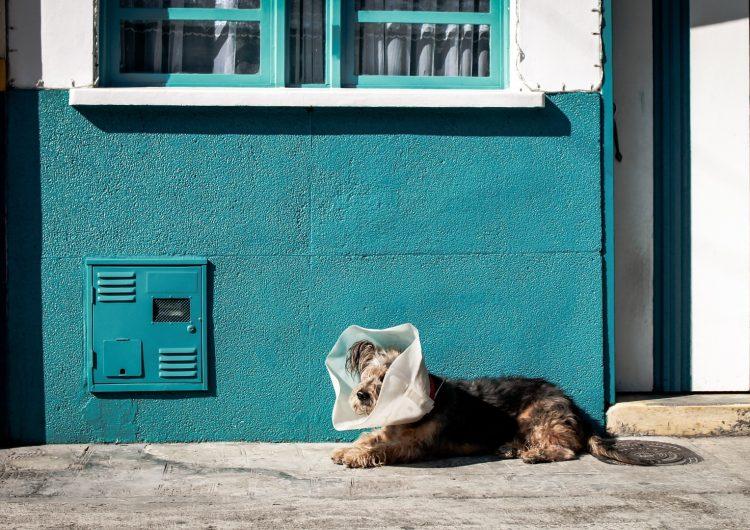 Querétaro estrena Unidad de Atención Animal