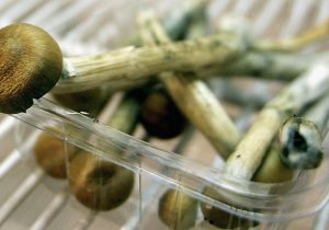 Los hongos mágicos se hicieron alucinógenos para evitar ser comidos