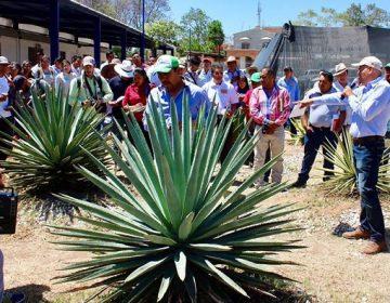 Voltean mezcaleros a Michoacán para obtener denominación de origen