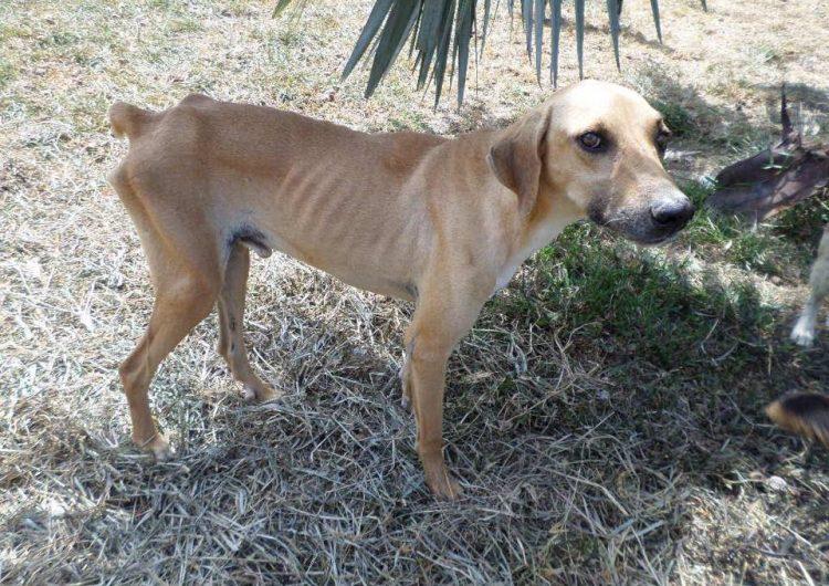 La otra crisis de Venezuela: aumenta el número de animales abandonados, desnutridos y enfermos