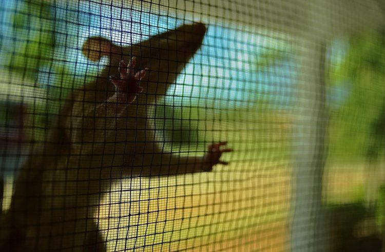 Policías argentinos culpan a las ratas por la desaparición de media tonelada de marihuana