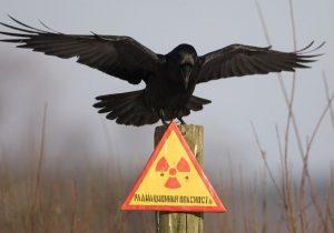 Chernóbil en imágenes: señales de vida después de la devastación nuclear