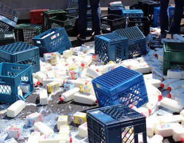 Detienen productores proyecto de secadora de leche: Gobierno