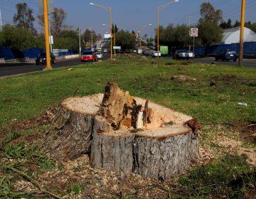 Plantean censar árboles para evitar ecocidios