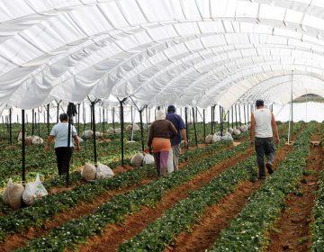 Registra sector agroalimentario crecimiento récord en 2017
