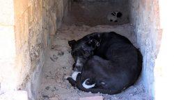 Denuncian crueldad animal en el Antirrábico de Ags.