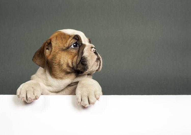 tumores-perros-tratamiento-cancer