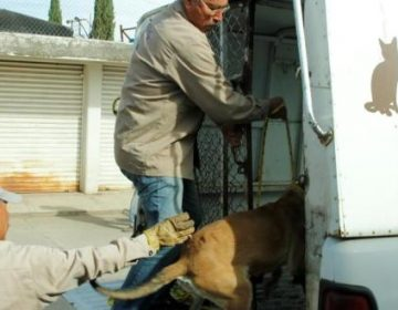 Entregan dueños a 678 perros para que los sacrifiquen