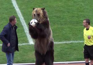 Activistas critican que se haya forzado a un oso para hacer trucos en partido de futbol